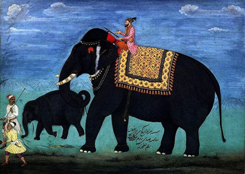 Elefante-de-la-india